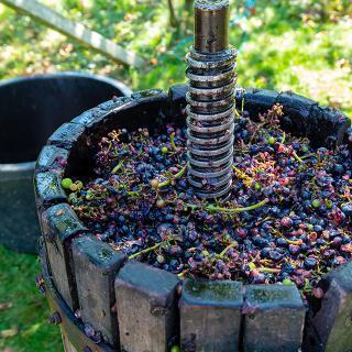 Hollejo de uva